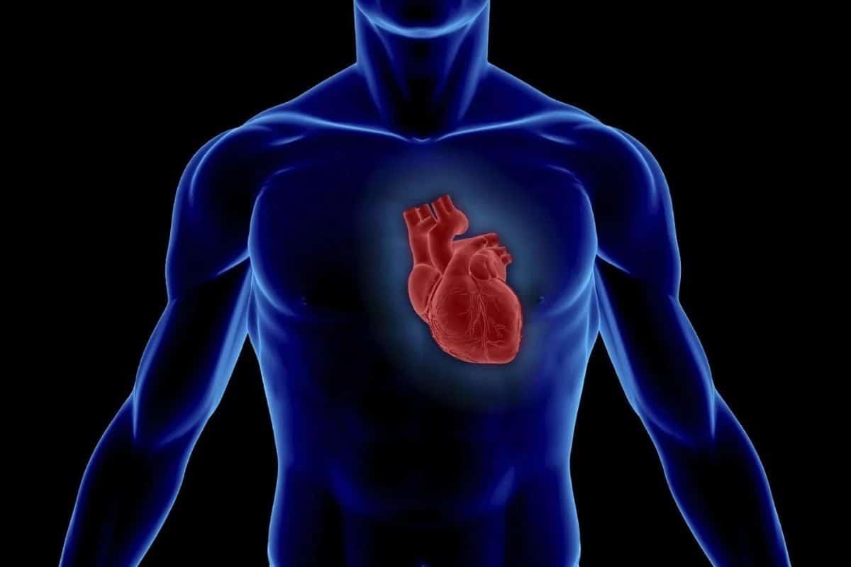 Magnesium Blutdruck